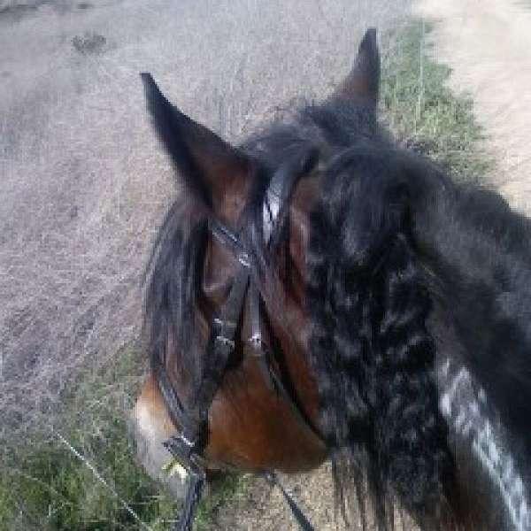 Dia Tia Performance Horses