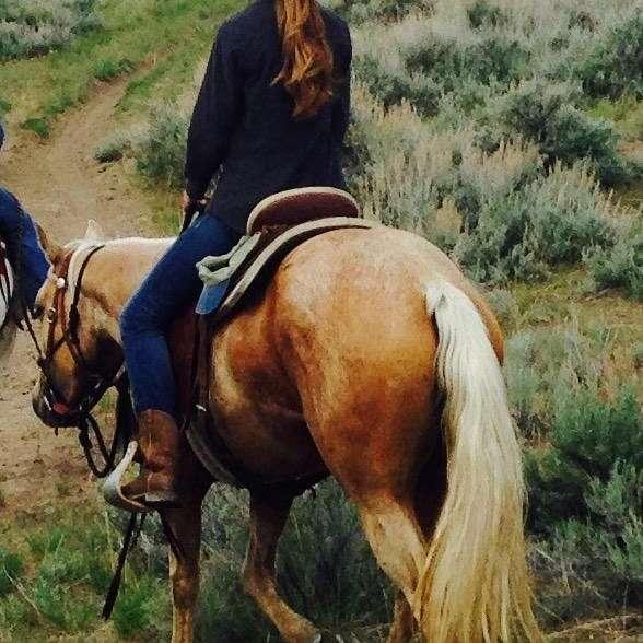 Schmidt Horse Training