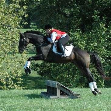 Benchmark Sport Horses