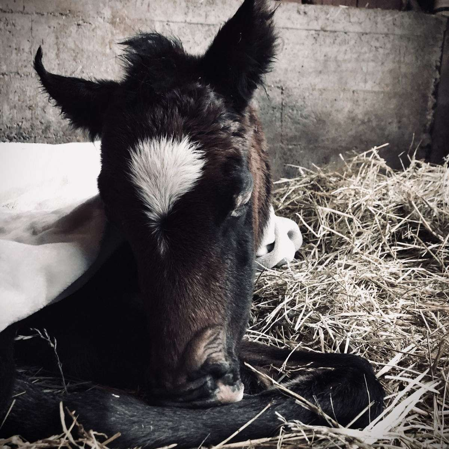 Tranquil Brookside Equine