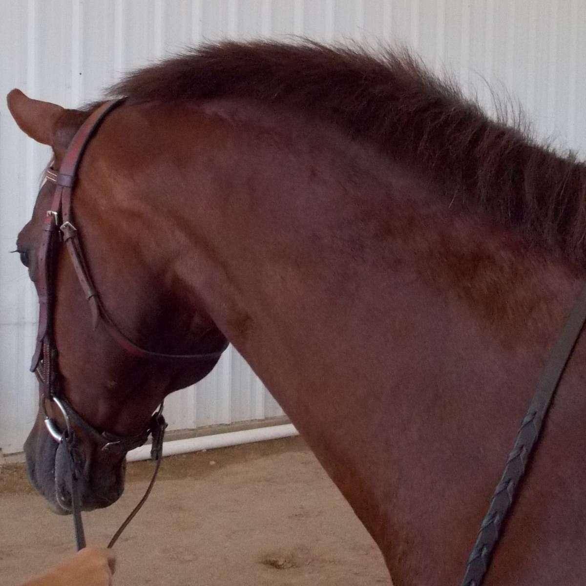 Narrowgate Sporthorses