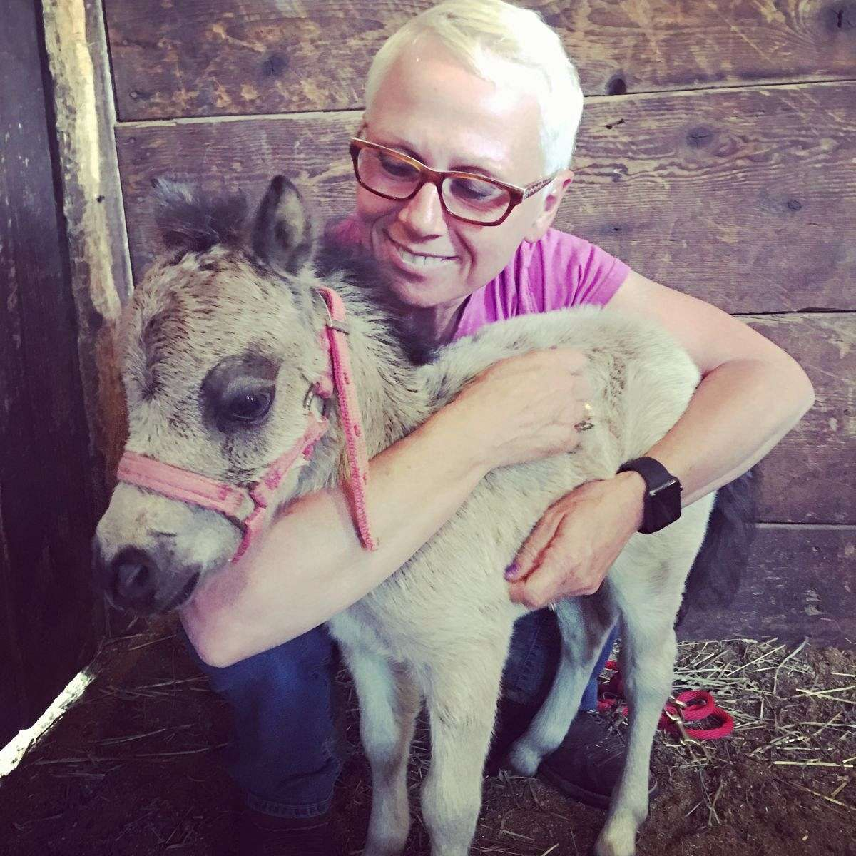 Seven Oaks farm Miniature Therapy Horses