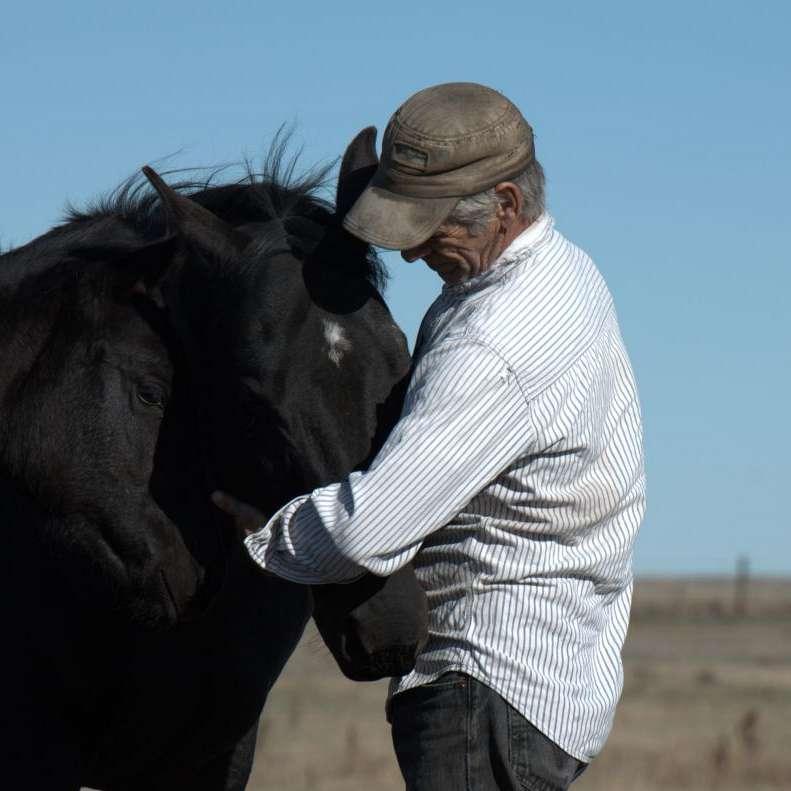 Prairie Silver Quarter Horses