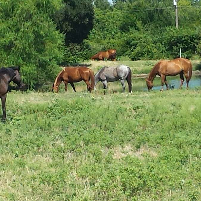 Dodson Farms