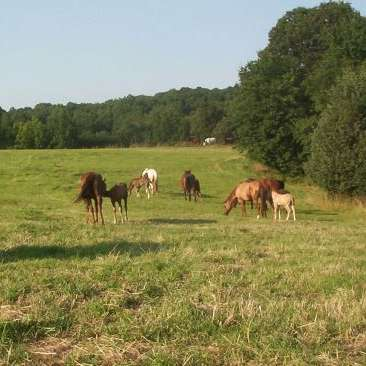Rileys Ridge Quarter Horses