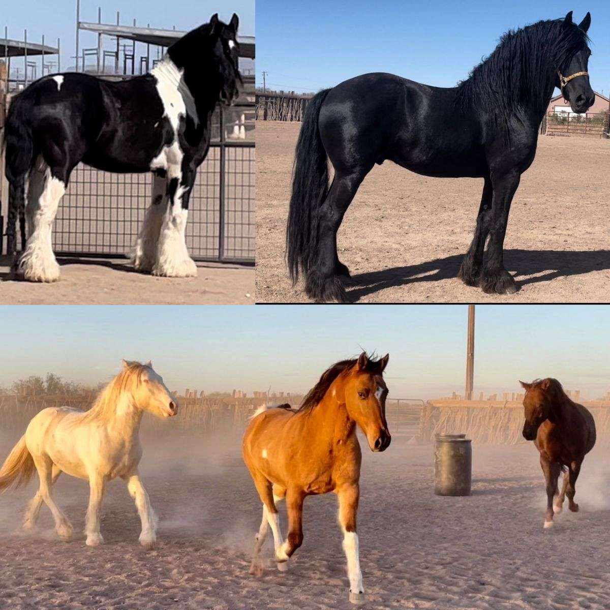 Cedar Oaks Equine