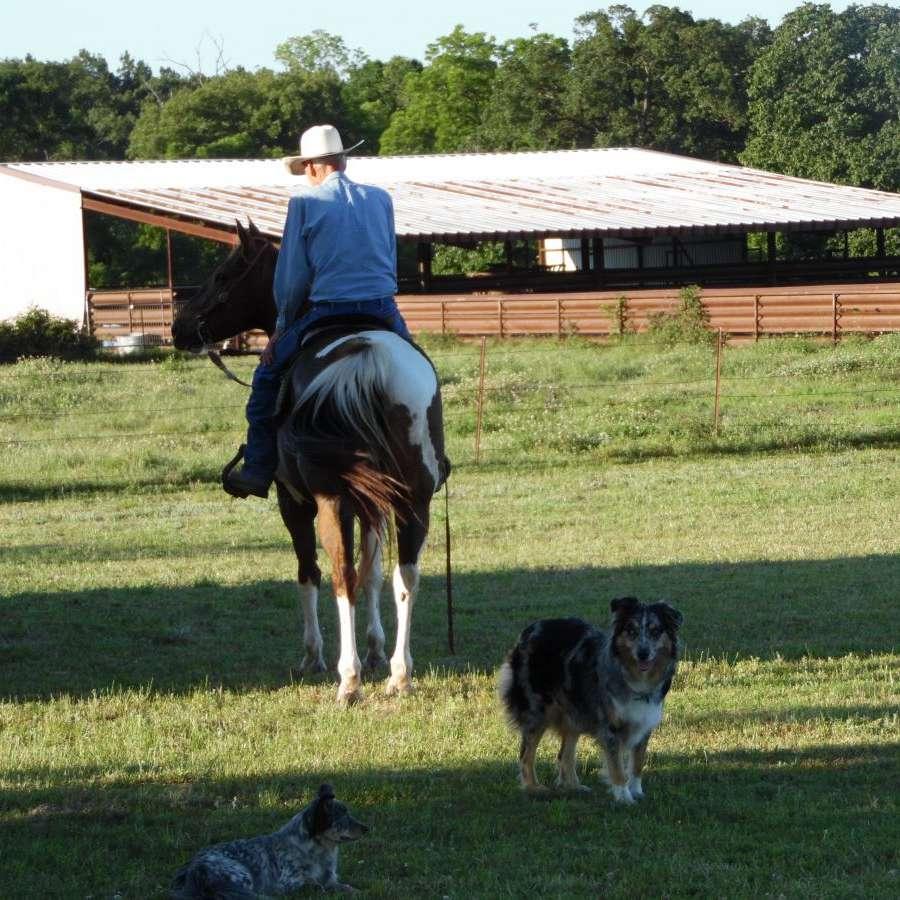 AFEW APHA-AQHA PERFORMANCE HORSES