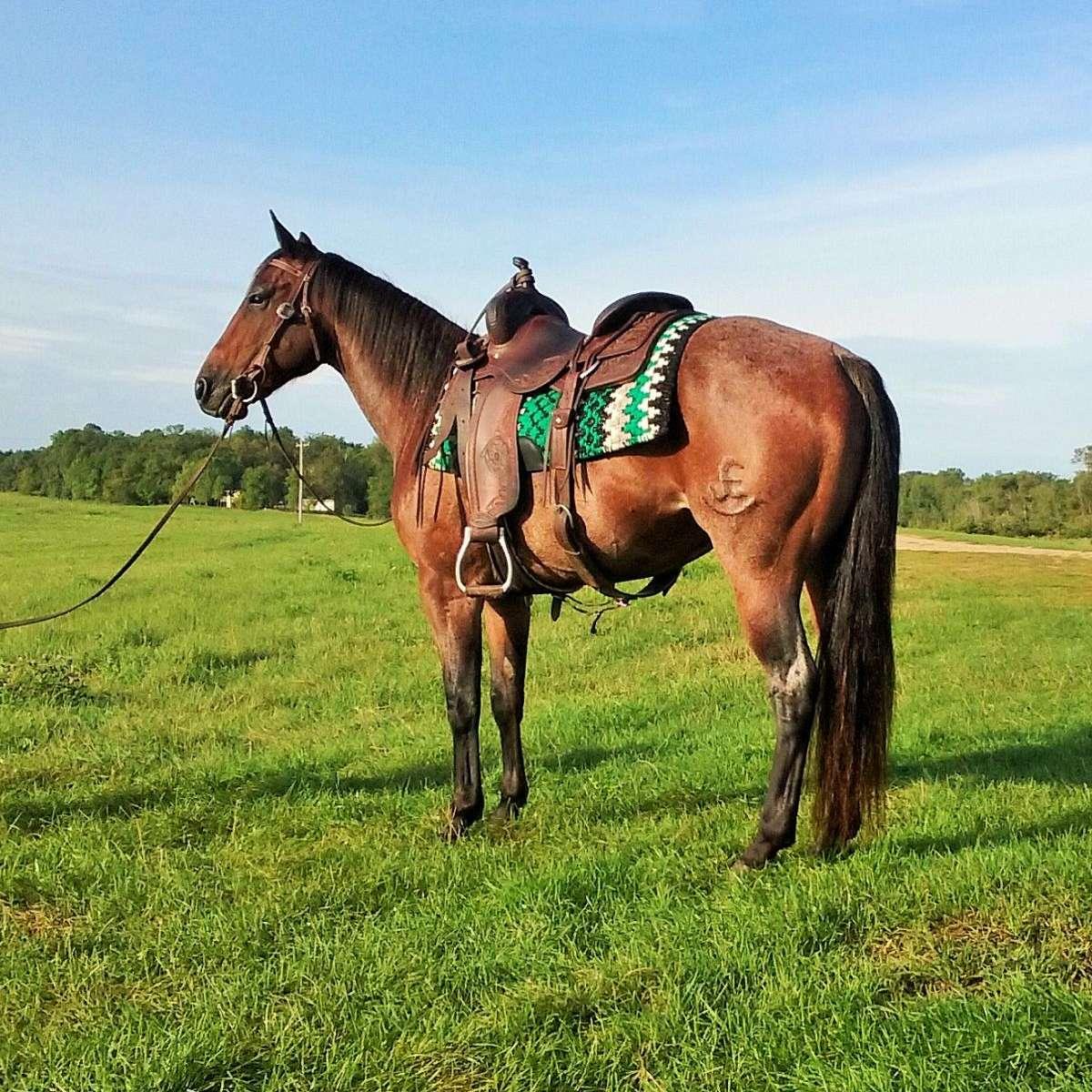 C2 Horse Company