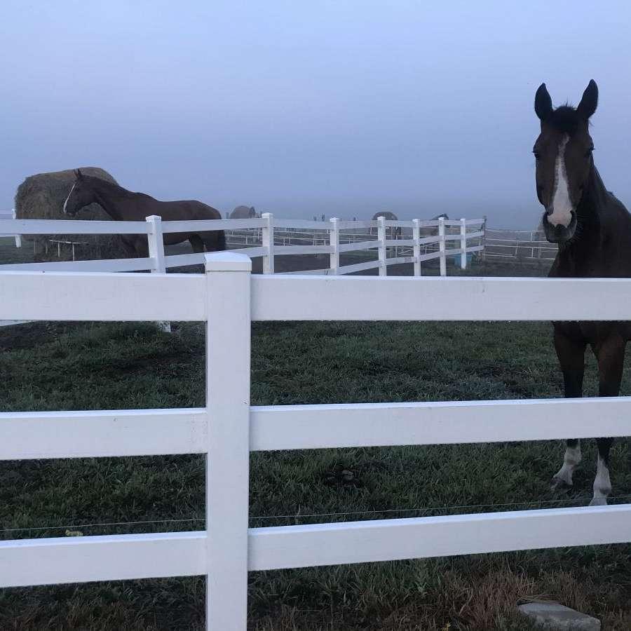 Hye Pointe Equestrian Centre