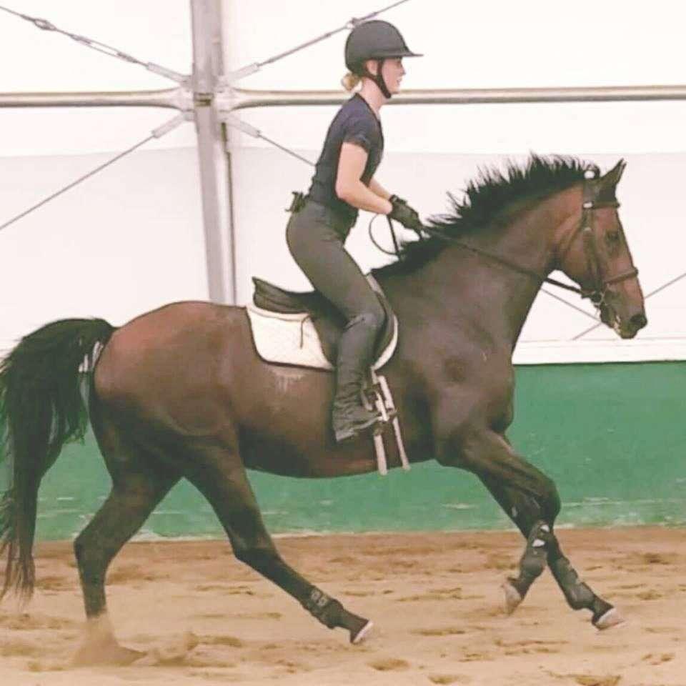 Saratoga Sporthorses