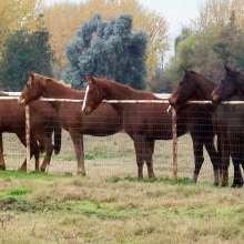 January Ranch