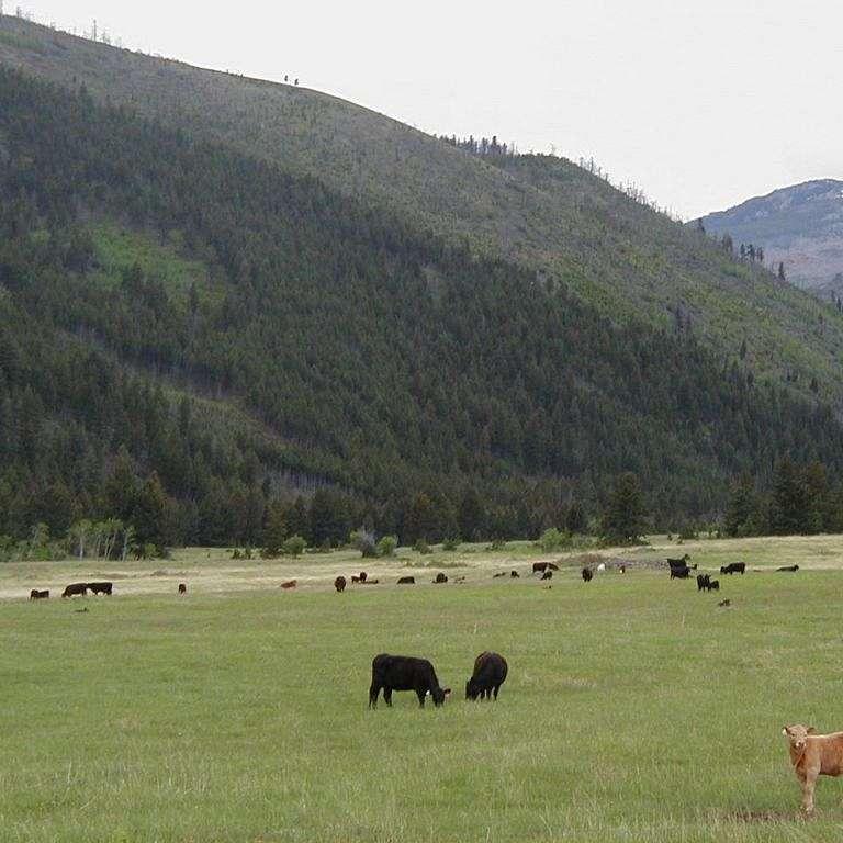 Elkhorn Quarter Horses