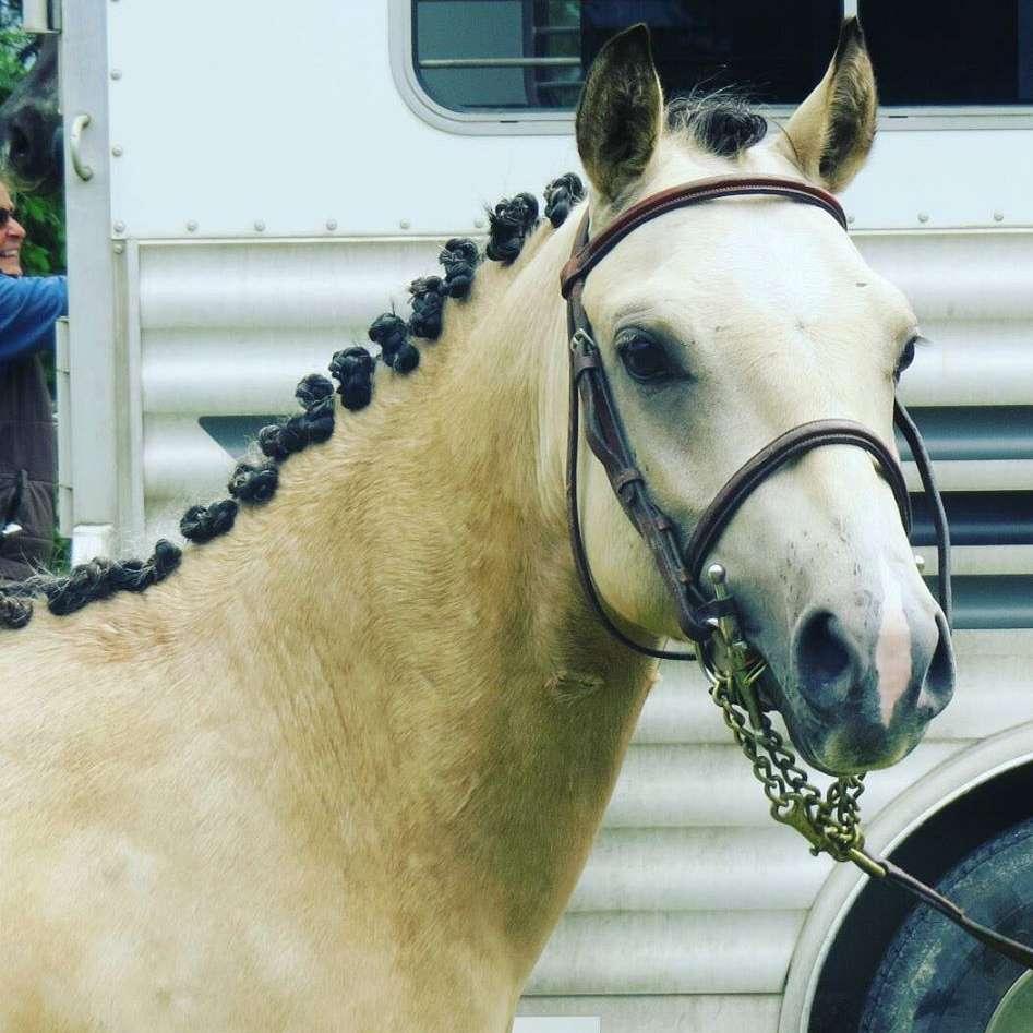 SC Sport Horses