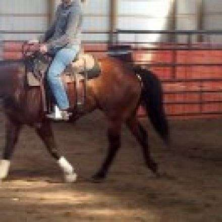 Shelby Potter Horse Training