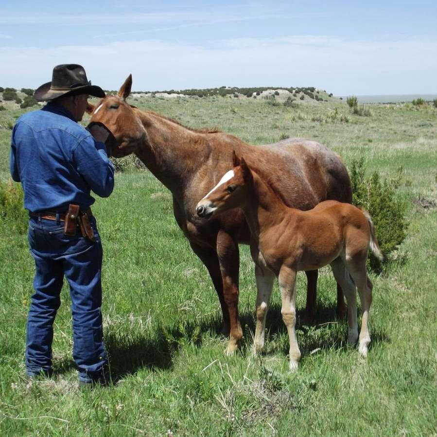 Clay Creek Ranch