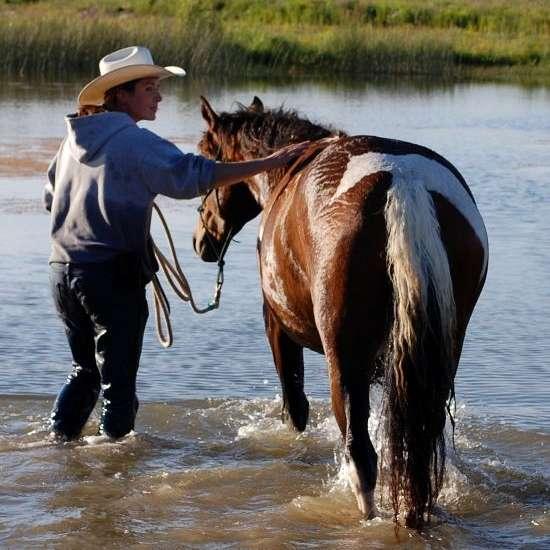 Free Rein Horsemanship