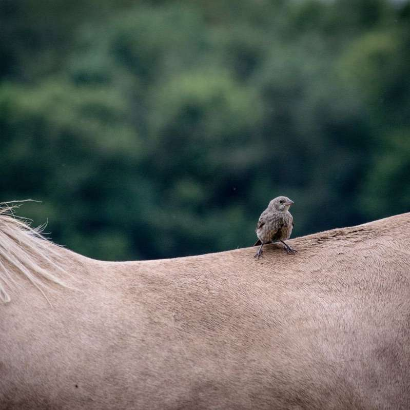 Kentucky Equine Humane Center