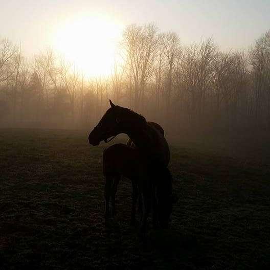 Farm  Equine sitter