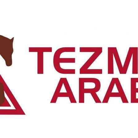 Tezmaral Arabians