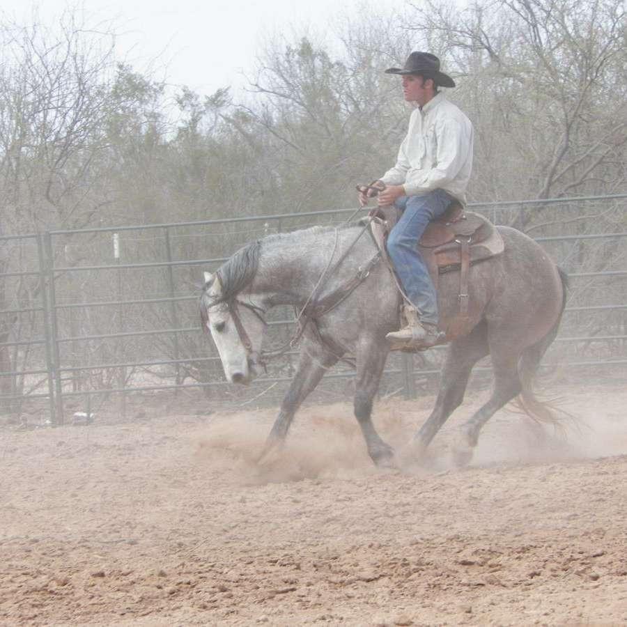 Wisemans Quarter Horses