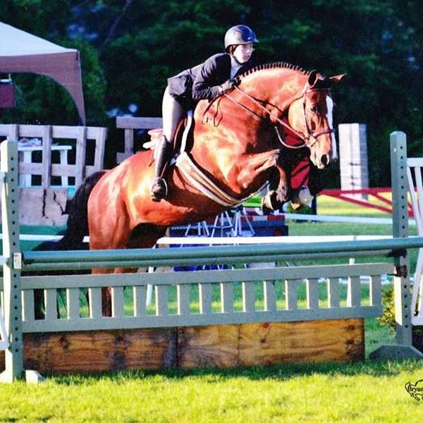 Turning Point Show Stables