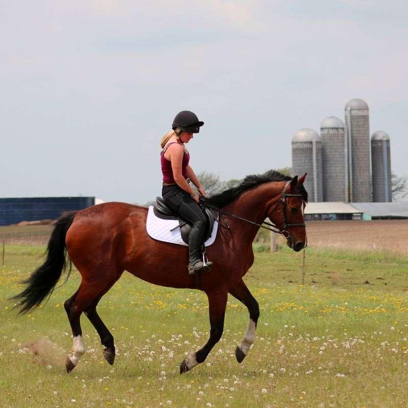 Fox Sport Horses