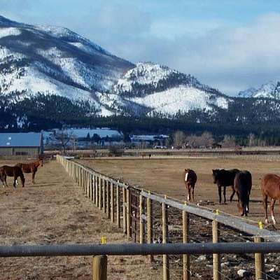 Shining Mountain Thoroughbreds