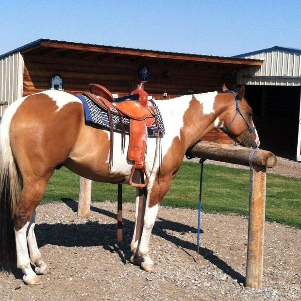 Holiday Horse Care  Boarding Stables Rosi Slater