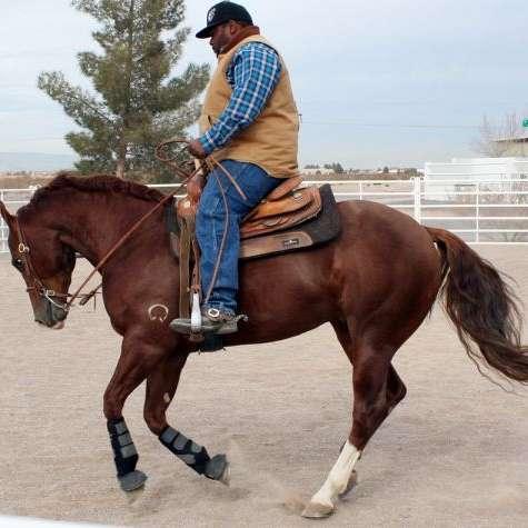 Royal Flush Stallion Station  Performance Horses