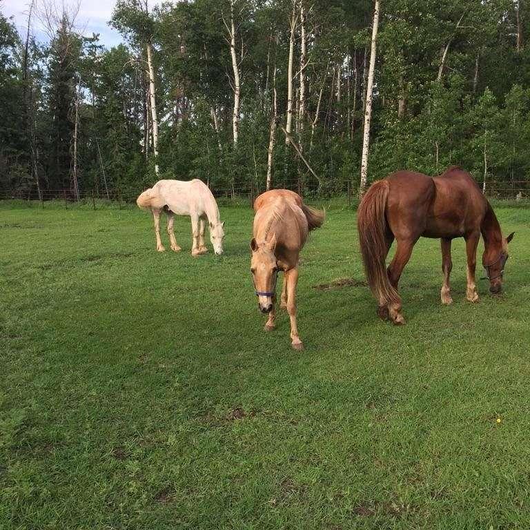 SRM Equine Services