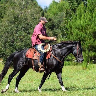 Rafter P Horse Training