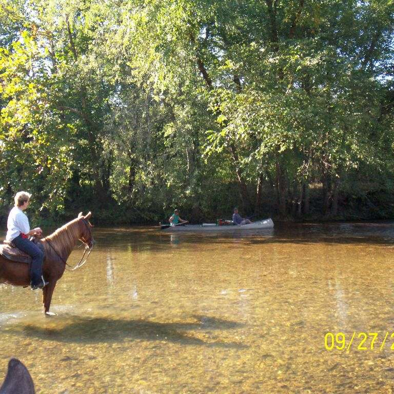 horses & moore