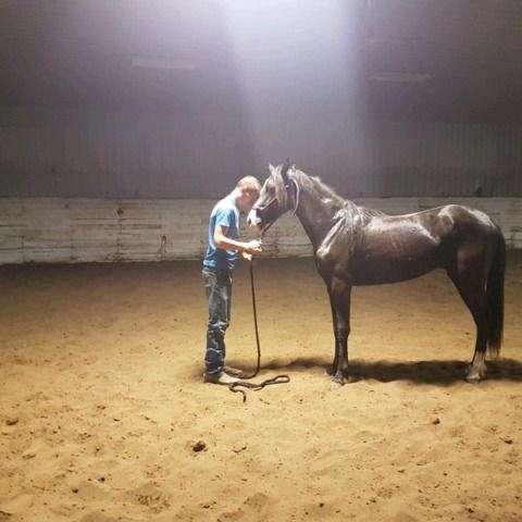 Q WHITE HORSE TRAINING