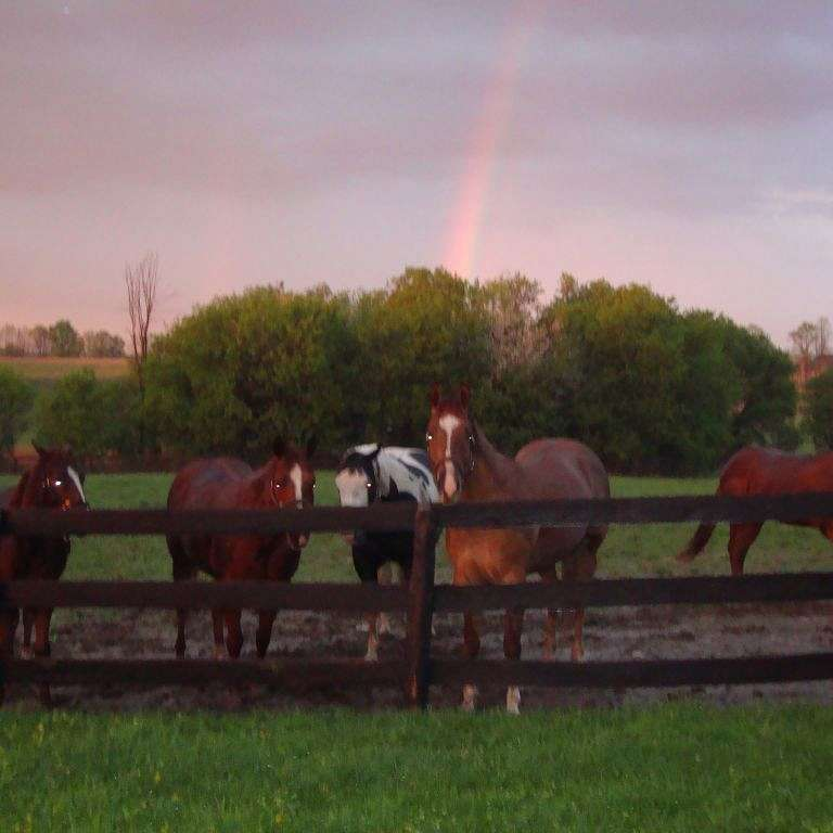 Reinbow Ridge Equestrian