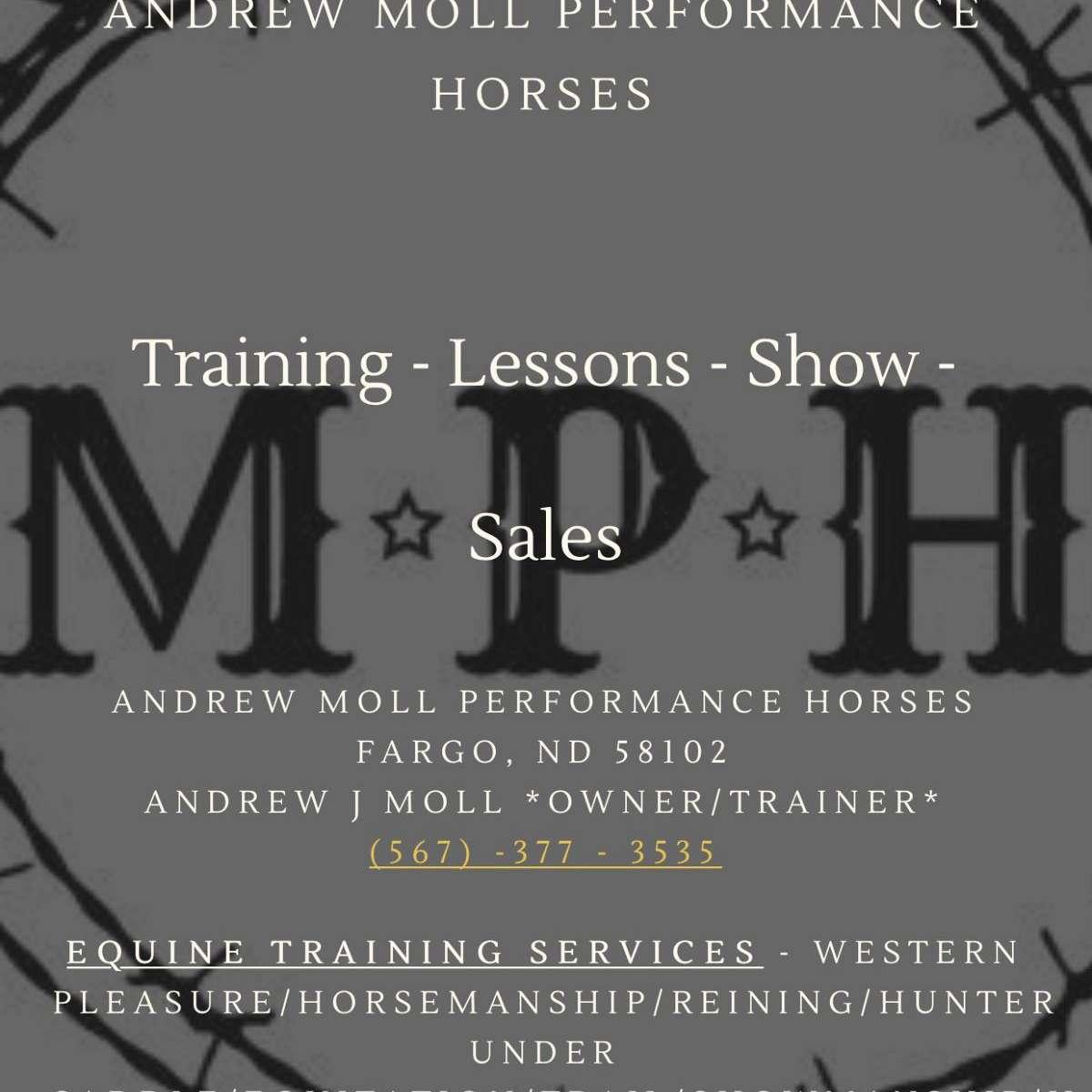 Andrew Moll Performance Horses