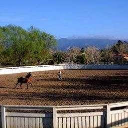AYM Arroyo Arabians