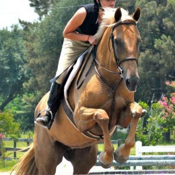 Sky High Equestrian Center