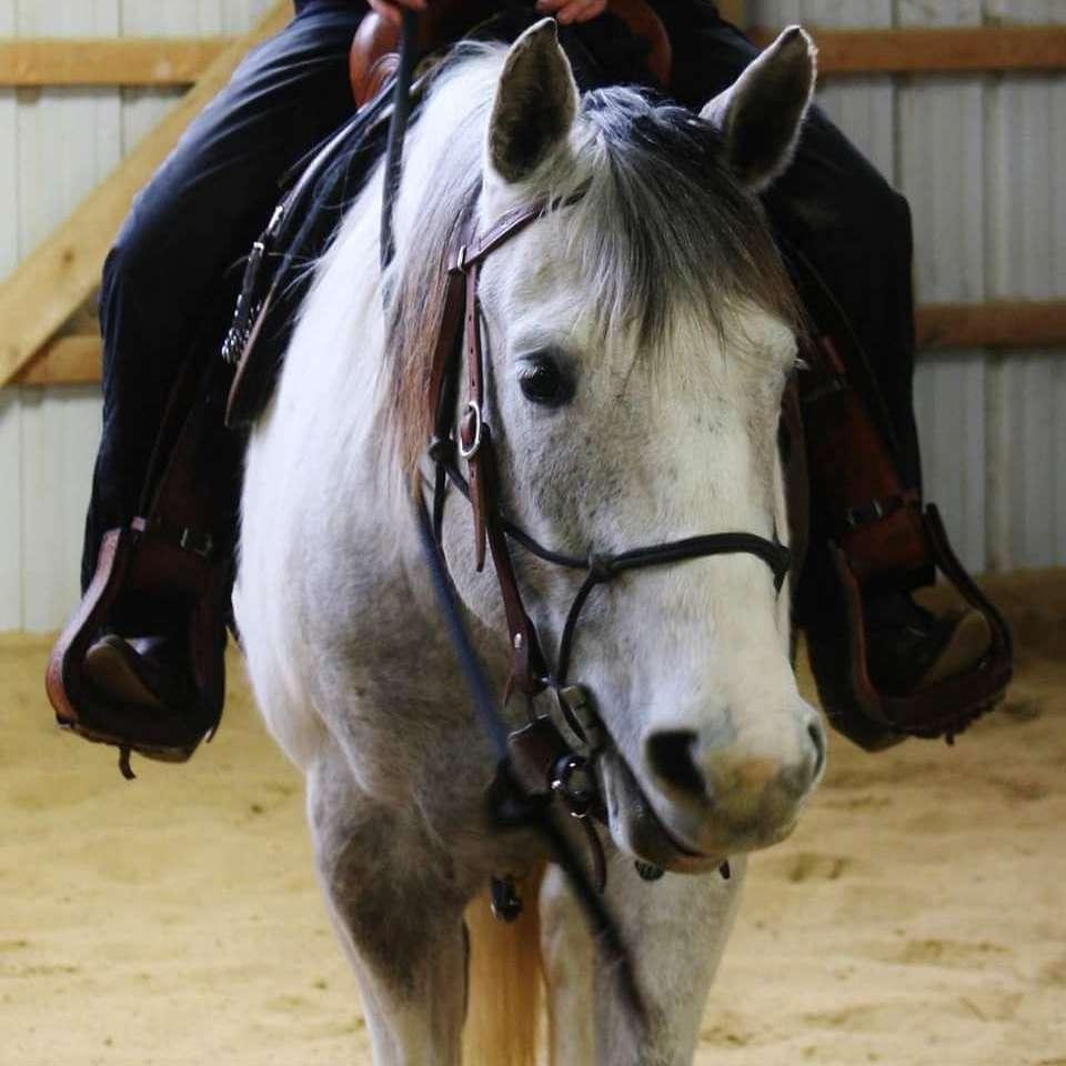 Adoration Equine