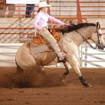 AJ Performance Horses