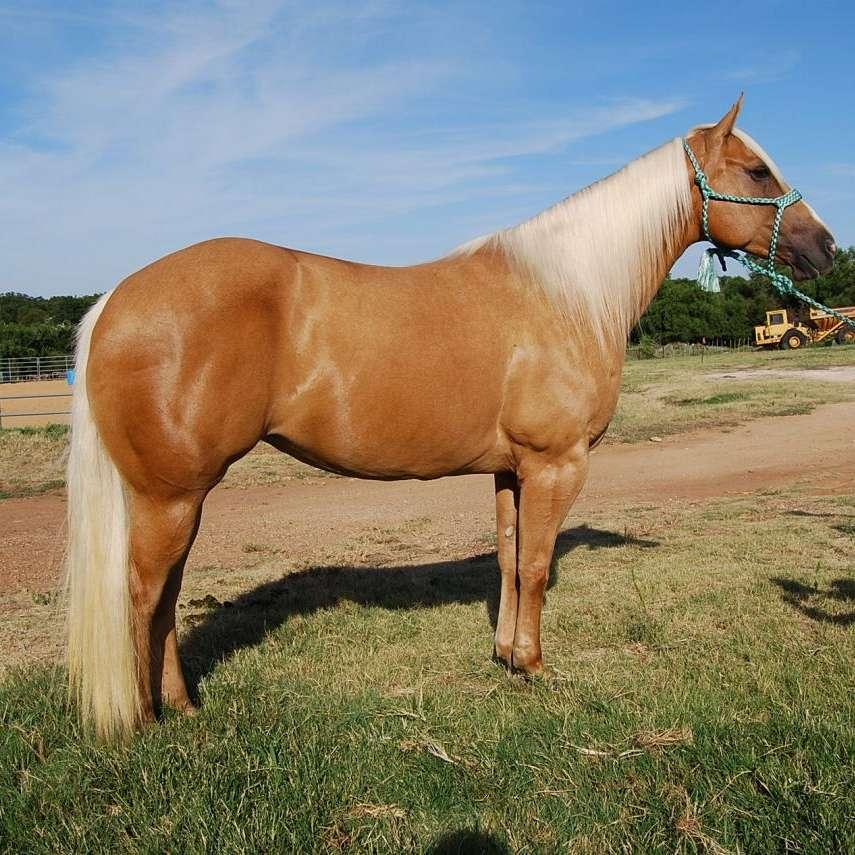 Texas Best Performance Horses