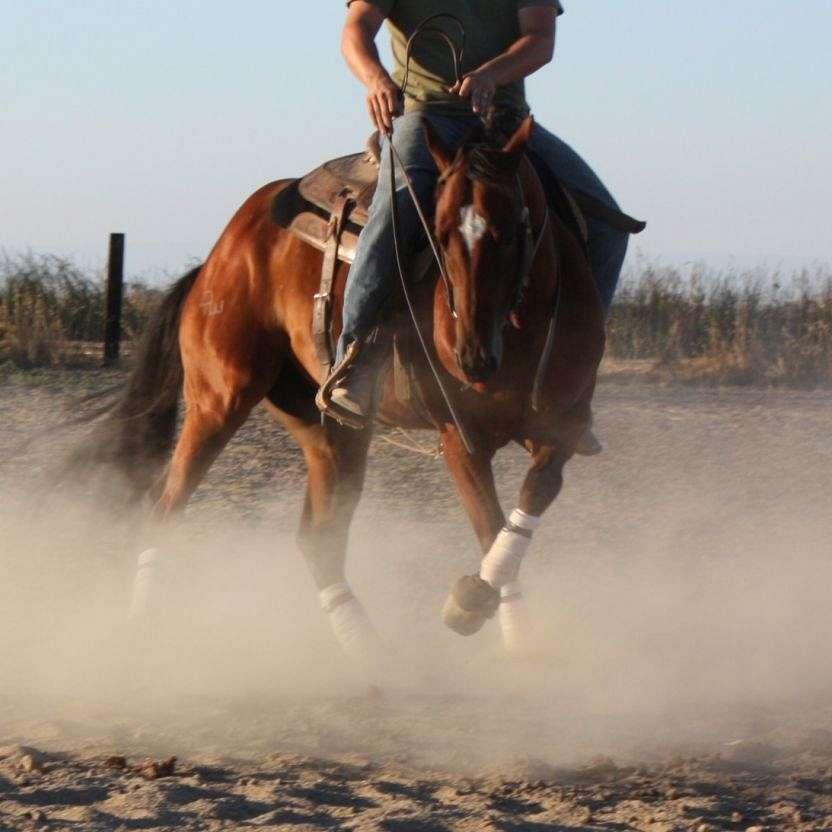 OWEN PERFORMANCE HORSES