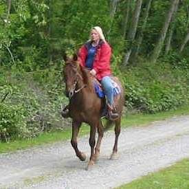 All Gaits Training &  Riding School