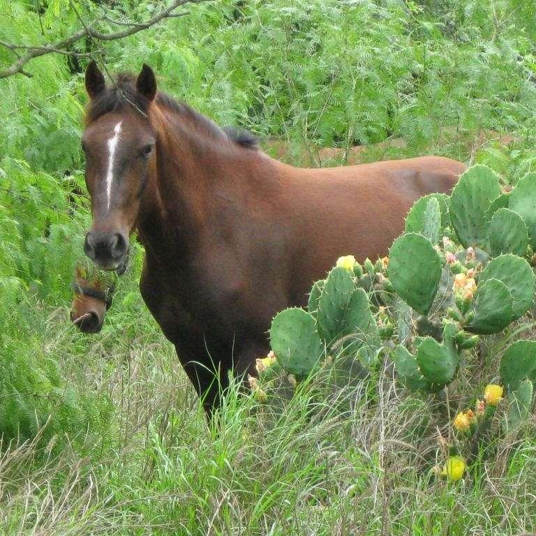 Rio-Spur-Ranch