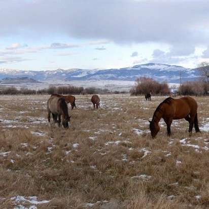 F HANGIN HEART QUARTER HORSES