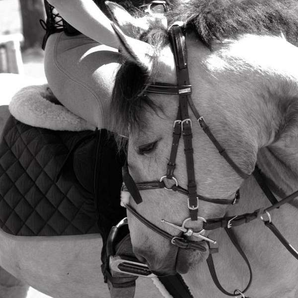 Dark Horse Farm