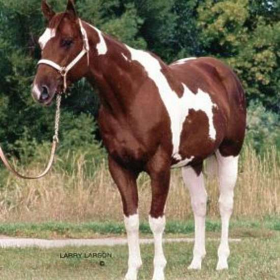 Cedar Lane Paints & Quarter Horses