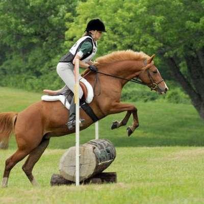 Glynmagic Welsh Ponies