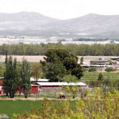 Miller Horse Farm