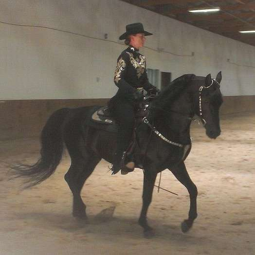 BELLE CHEVAL TRAINING
