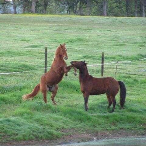 WB Performance Horses